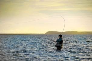 Lystfiskernes yndlingsbytte dør i Limfjorden