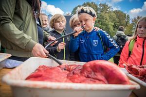 Se billederne fra Aalborg Zoo: 7000 børn, én astronaut og rigtig mange popcorn