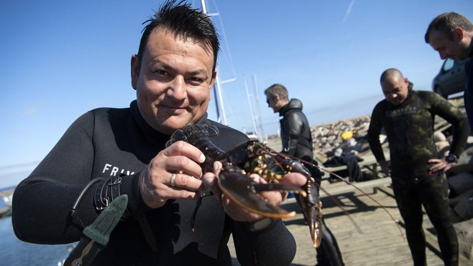 Jesper Kondo - med én af de hummere, som lørdag blev hentet op fra Limfjorden af fridykkerne. Foto: Mette Nielsen