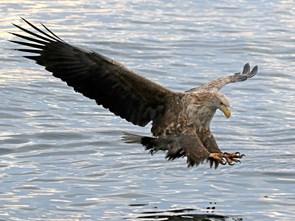 Oplev Nordeuropas største vingefang