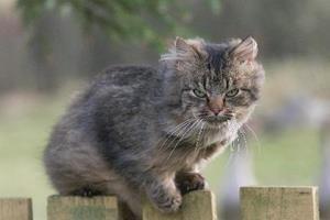Katte svigtes