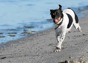 Nu må du slippe hunden løs på stranden