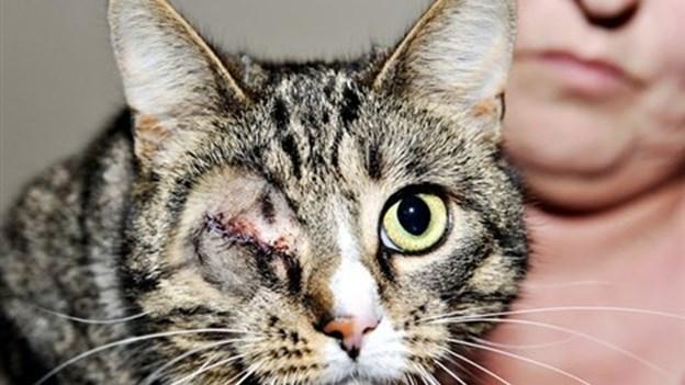 Kat skudt i øjet