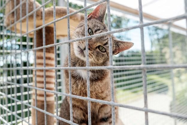 En fræk kat, parat til at lave ballade hos en ny familie. Foto: Lasse Sand