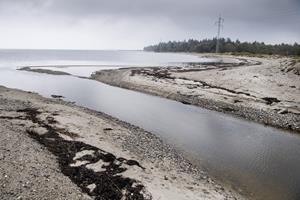Coli-bakterier i vandløb: Nu skal forurening under lup