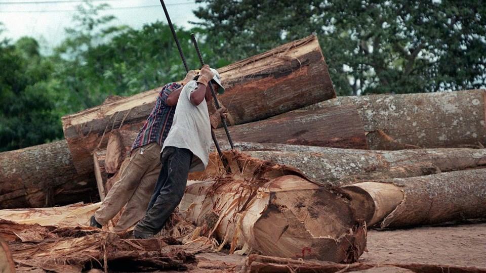 Anklagerne i sagen mener, at Arthur Lamar Adams i perioden fra 2011 til sidste måned fortalte investorer, at han havde købt rettighederne til at fælde træer billigt på private landområder og videresælge dem til savværker for en højere pris. Foto: Scanpix/Henning Bagger/arkiv