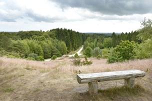 De har arbejdet på det i ti år: Nu er Nordjyllands første naturpark tæt på