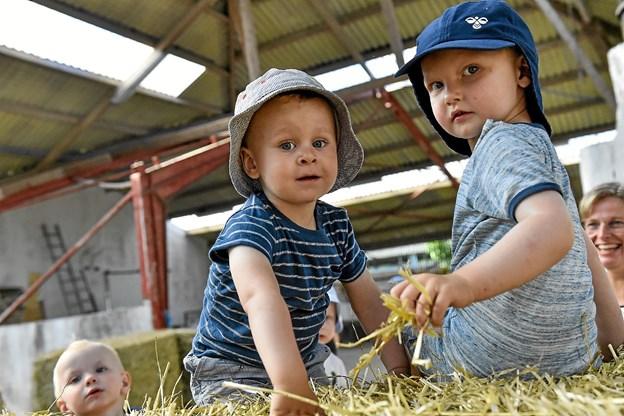 Drengene skulle helt op i stakken af halm. Her Christian og Mason. Foto: Ole Iversen