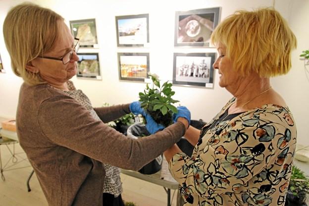 Anne-Grethe Rasmussen og Birgitte Bødker lavede planteplaneter. Foto: Jørgen Ingvardsen Jørgen Ingvardsen