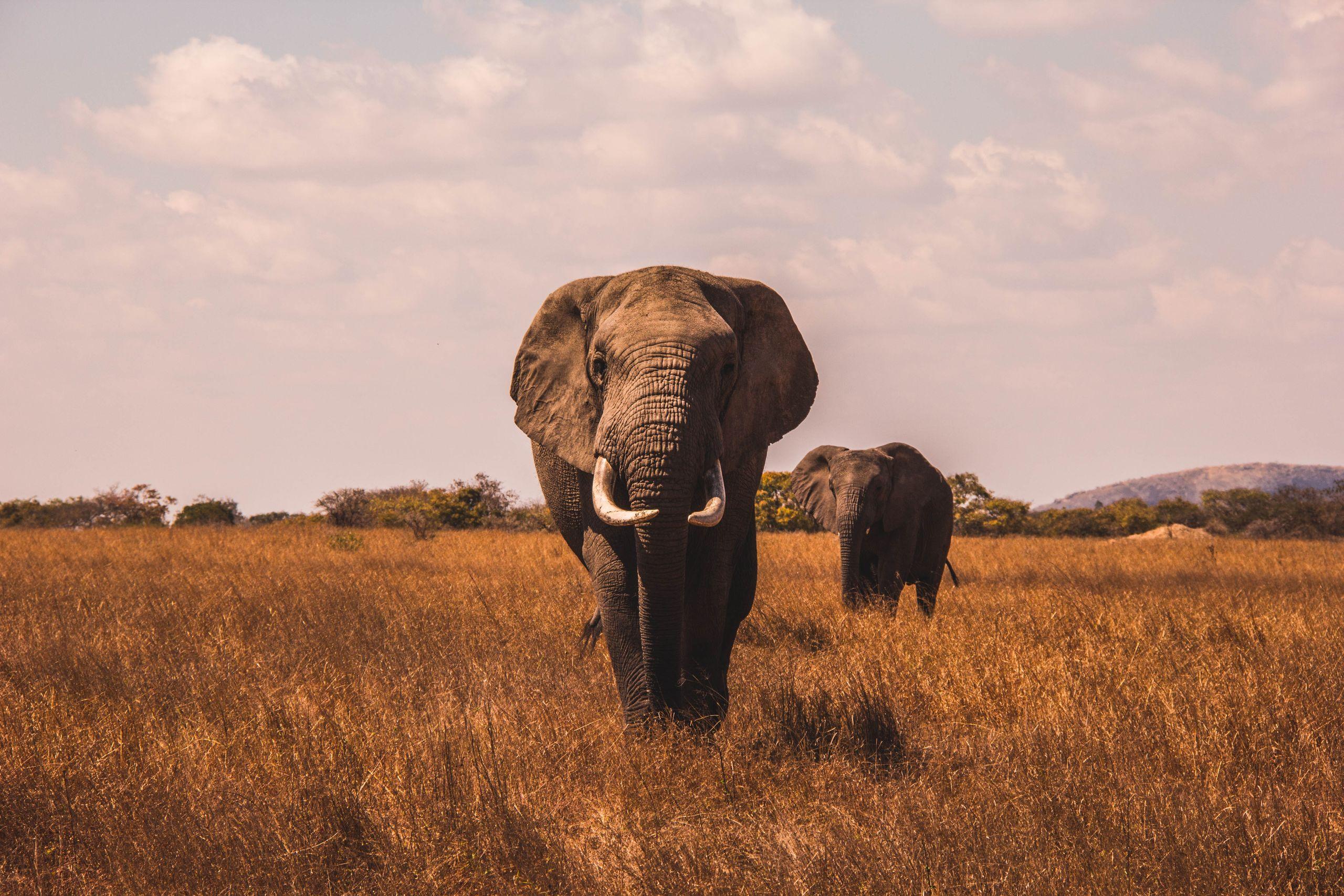 Oplev safariens vilde dyr i trygge rammer