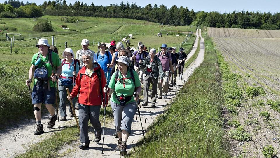 Hærvejen er en populær vandrerute og strækker sig fra henholdsvis Frederikshavn eller Hirtshals i Nordjylland til Padborg i Sønderjylland. Her ses vandrere på hærvejen ved Them syd for Silkeborg. Henning Bagger/Ritzau Scanpix