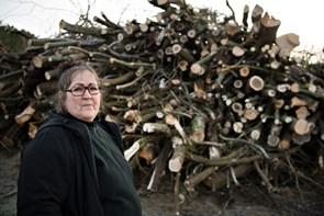Naturpleje af skov i Hirtshals vækker kritik