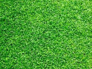 Velplejet græs kræver professionelt udstyr