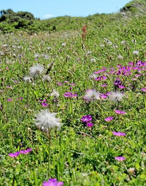 Tur til Tversteds Grønne Front på vild blomsterdag