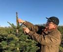 Nordjyske juletræer langt hjemmefra: Jørgens graner skal fejre jul i England