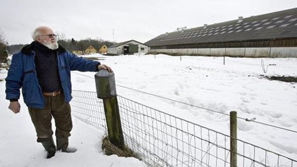 Fra sit hegn kan Verner Nielsen se lige over til den staldbygning, hvor der nu er svin. Og det lugter. Foto: Grete Dahl