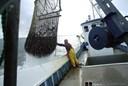 Ny lov bremser kvotekongers fangst af muslinger og østers i Limfjorden: Urimelig ekspropriation, mener fisker