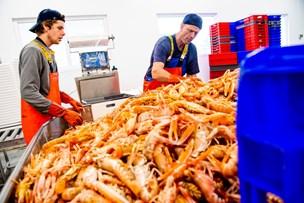 Torsk fra Thy til Toscana: Italienerne er vilde med fisk fra Hanstholm