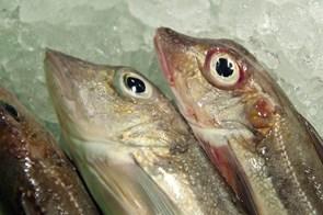 Landet for 63 mio. kr. flere fisk i Hirtshals