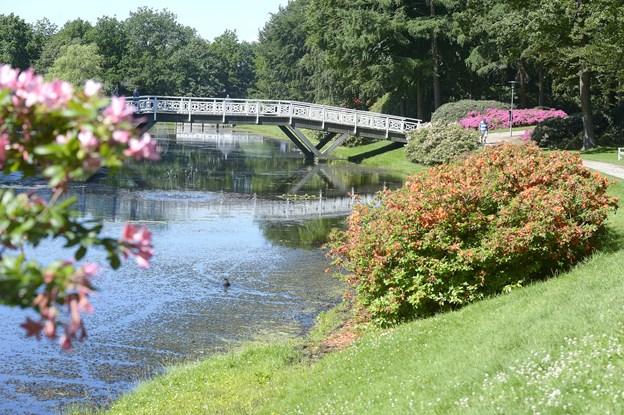 Den litterærepicnic vil byde på gåtur til RhododendronparkenArkivfoto: Bente Poder