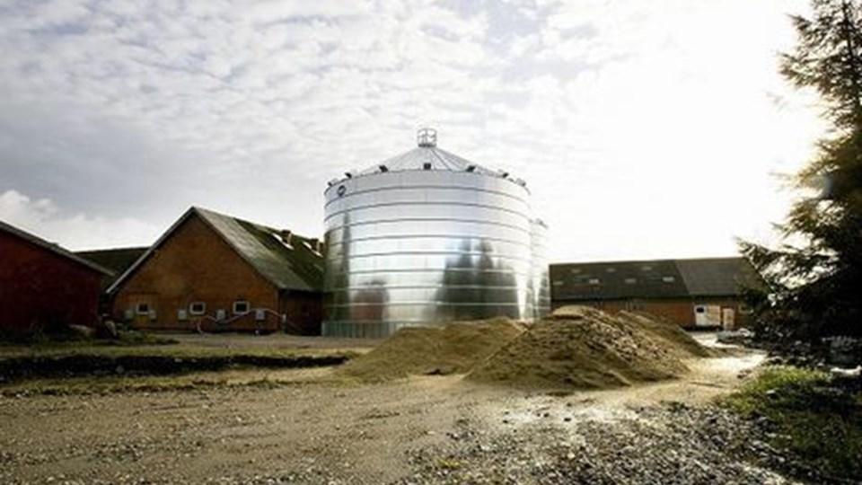 De to ulovligt opførte siloer i St. Binderup. FOTO: PER KOLIND