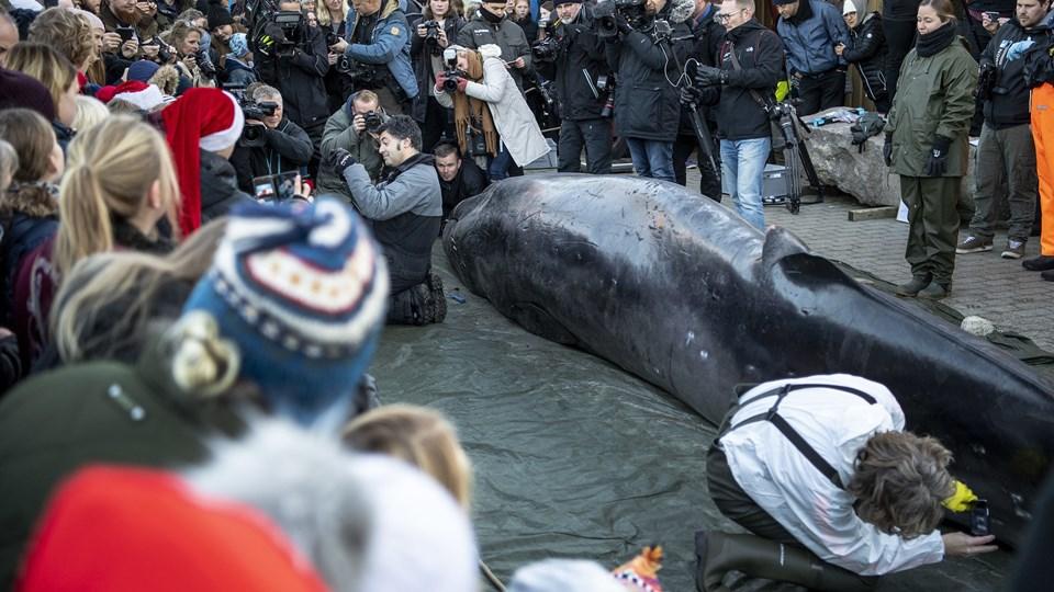 Hvalen var interessant både til vands og til lands.