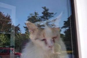 20 katte fundet efterladt i lejlighed - kun fire overlevede: Katteejer kalder det vanvidshetz