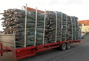 KFUM-spejderne er klar med kæmpe juletræssalg