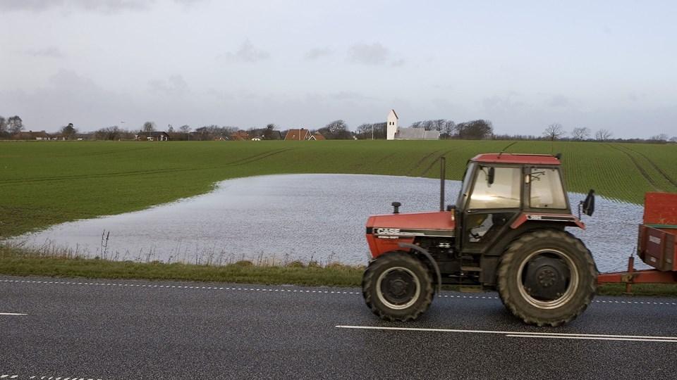 Store vandmængder skader landbruget og er et overset klimaproblem i Danmark, mener professor. Foto: Scanpix/Henning Bagger/arkiv