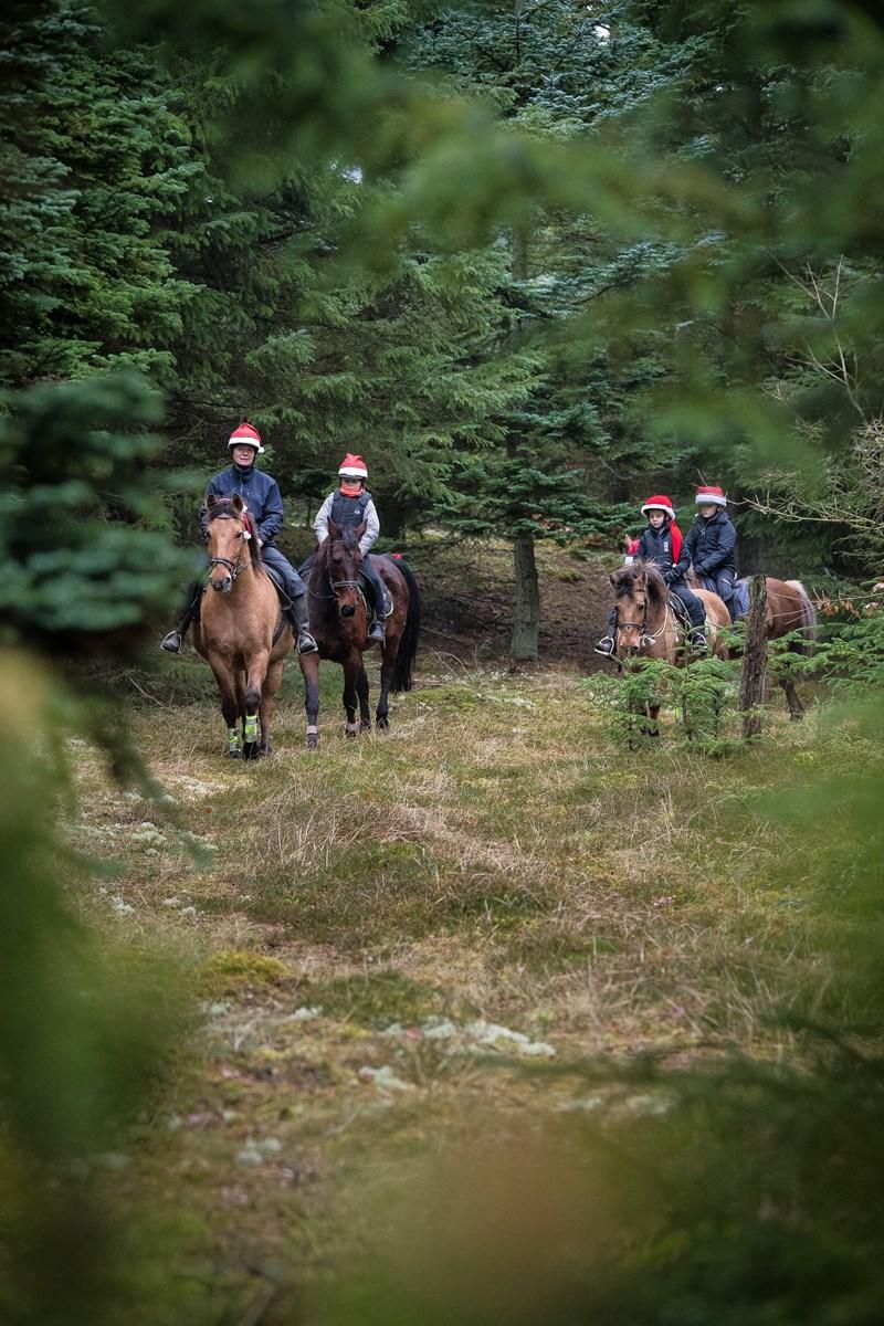Mette Åkerstrøm kender Tvorup Klitplantages mange stier. Turen foregår kun i skridt og trav/tölt og varer 1-1½ time.