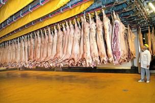 Japanere vil spise dansk gris: Øget eksport skaber job i Thy