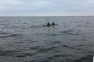 Se de vilde videoer: Nordjyske fiskekammerater omringet af stor flok delfiner