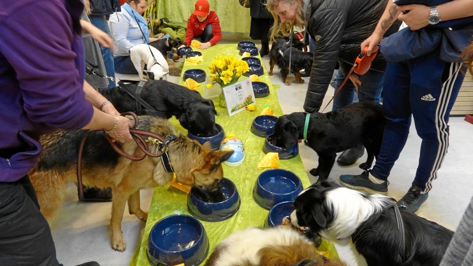 9. april er der påskefrokost for hunde i Maxi Zoo Nørresundby. Billedet er fra et tidligere arrangement.