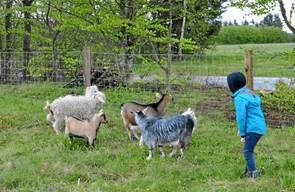 Kangamiut gør nu også i geder