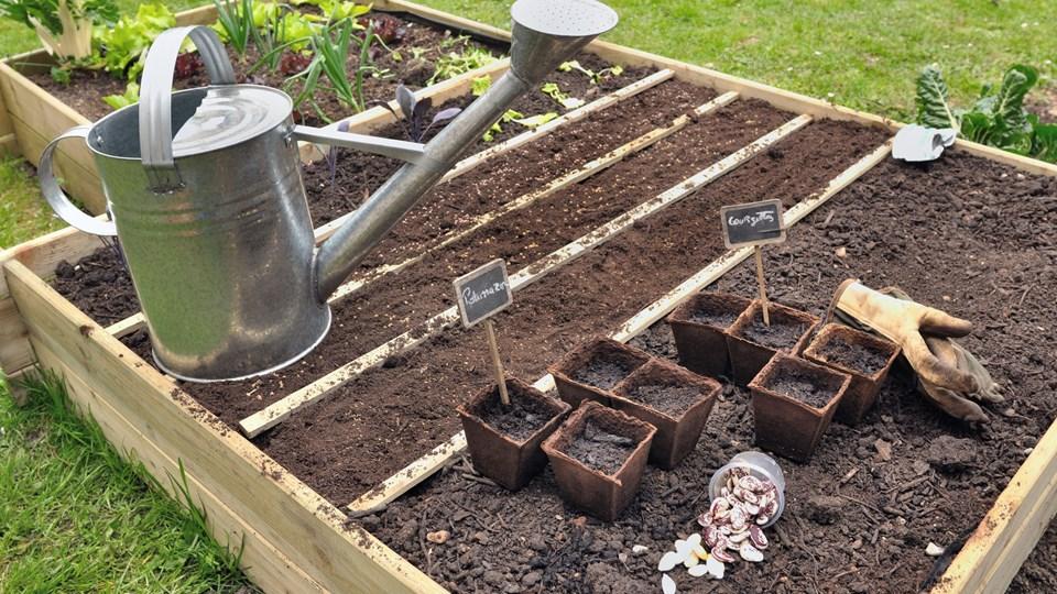 I maj er jorden blevet tilstrækkeligt varm til, at man kan plante det meste. Hold dog igen med agurker og græskar. Foto: Free/Colourbox