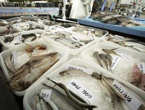 Succesen fortsætter: Næste introduktionskursus til fiskebranchen starter i august