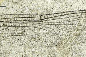 Fossil sender Ejerslev på verdenskortet