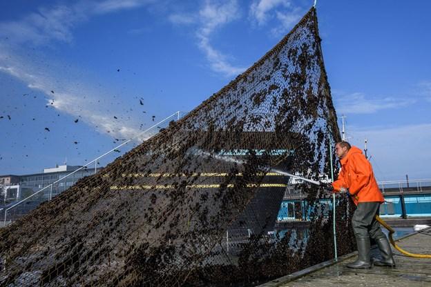 Peter Holm har taget fat på spulingen af nettet, og det kraftige vandtryk sikrer, at muslingerne tvinges til at slippe deres tag i plasticnettet.