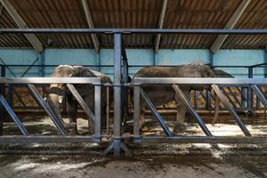 Cirkusdirektør om salg: En god dag for os og elefanterne