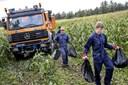 49-årig dømt i sag om 1000 kg hamp: Beviserne fra Danmarks største høst blev destrueret ved en fejl