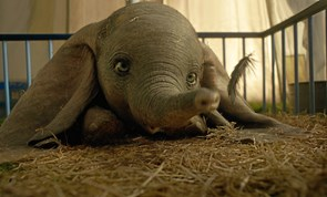 Dumbo i BASbio