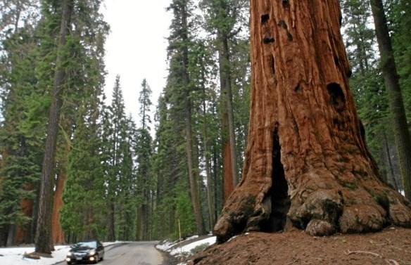 Kelterne tilbad træer. Privatfoto.