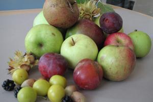 Madkæder holder farlige frugter hemmelige