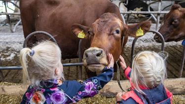 Se masser af billeder fra Åbent Landbrug: - Hej Ko, er det dig, der laver mælk til vores morgenmad?