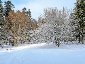 I skovens dybe, stille vinter ro