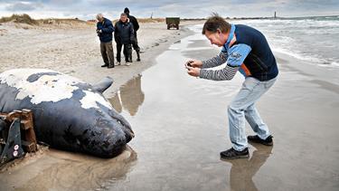 Dykker undersøgte død grindehval: - Det var en stor følelsesmæssig oplevelse