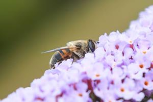Forskere advarer om historisk kollaps blandt insekter