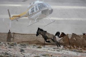 191 vilde heste fundet døde i mudderpøl i Arizona