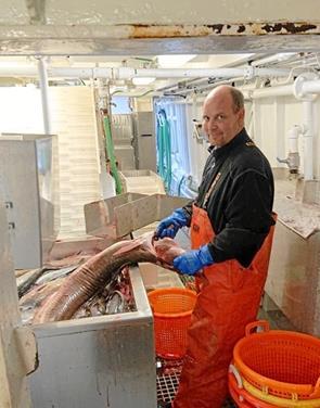 Sjælden dybhavsfisk afleveret til Nordsøen Oceanarium