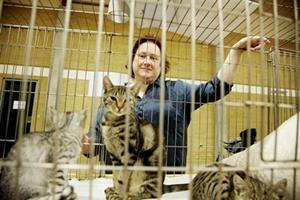 Velopdragne ejere af katte